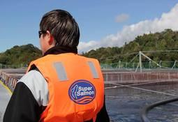 Ganancias acuícolas de Agrosuper crecen 12,4% en el 2018
