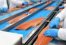 Marzo: SEIA no aprueba proyectos en Pesca y Acuicultura