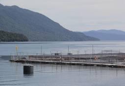 Chile: Centros salmonicultores con alta carga parasitaria llegan a 20