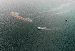 Confirman faenas para reflotar wellboat Seikongen