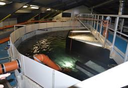 Slik vil Fiskeridirektoratet rømningssikre landbaserte anlegg