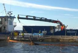 Huon carries out first harvest at yellowtail trial site