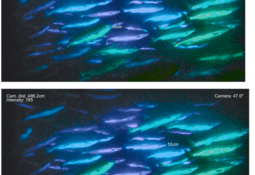 3D-undervannskamera avslører hvordan fisken har det
