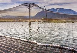 1T: Marine Harvest Chile incrementa sus ganancias en 41%