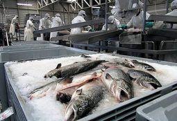 Marzo: Cosechas de salmón Atlántico aumentan en 24%