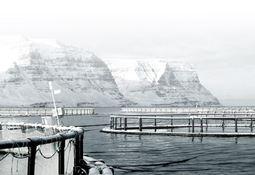 Islandsk rett avviser anken mot Arnalax