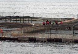 ASC trabaja en nuevas normas para bienestar de los peces