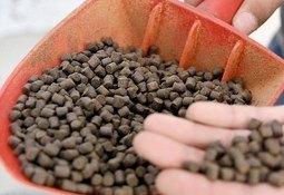 Productores de alimentos para peces afirman que respetan la libre competencia