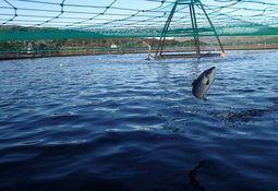 DNB reduce estimación para precio del salmón noruego