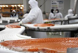 Chilean salmonid export earnings fall 9.3% in May