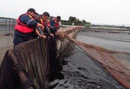 Salmonchile destaca mayor vinculación con trabajadores y comunidades