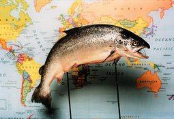 Mayo: volumen de envíos de salmón a EE.UU. sube un 6,9%