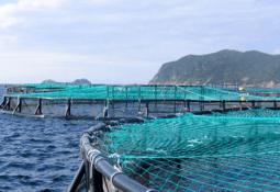 FAO se reúne para analizar estado mundial de la pesca y la acuicultura 2018