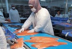 Trabajadores del salmón llaman a resguardar la salud ante Covid-19