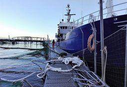 Marine Harvest står i stormen