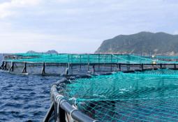 Bío Bío: Inversión de US$14 millones para cultivar salmones es presentada al SEIA