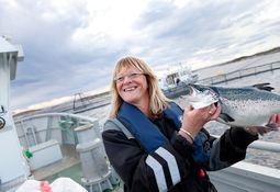Laksefest i Frøya - tar 28 millioner i utbytte
