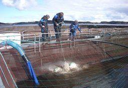 Vil bidra til fiskevelferd i ren not