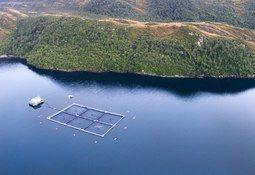 Subpesca proyecta crecimiento de 18% en siembra de salmón Atlántico en Magallanes