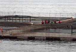 Bíobio: Reingresan proyecto de cultivo de salmón en tierra