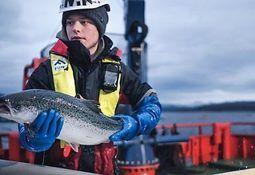 Cermaq desarrollará política de bienestar para peces