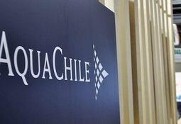 Primer semestre: Aquachile registró utilidades por US$ 55,7 millones
