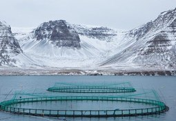 Icelandic angling rights owners lose second bid to close salmon farms