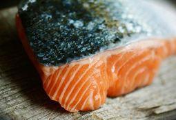 Precio del salmón noruego registra leve baja
