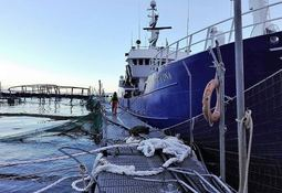 Mowi Chile escape 'likely to have damaged environment'