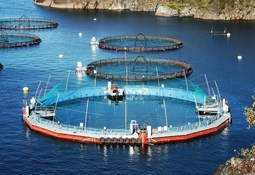 Cermaq puts first smolts into tarpaulin-wall closed cage