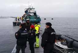 SMA sigue investigando escape de salmones de Marine Harvest