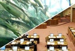 Aprueban legislar proyecto que permite capturar salmón escapado