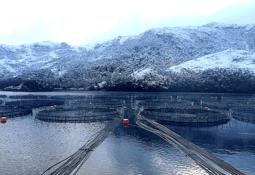 Gobierno rechaza prohibir la producción de salmón en Magallanes
