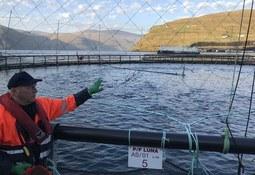 Stor suksess med storsmolt - setter ut fisk på hele 650 gram