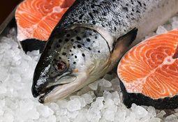 Leve aumento en precio de salmón noruego