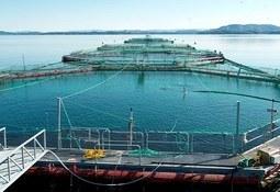 Blom Fiskeoppdrett AS digitaliserer hverdagen
