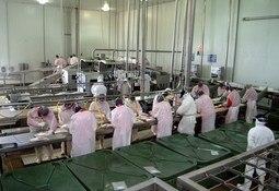 Ley de Protección al Empleo: Cómo se implementa en la salmonicultura chilena
