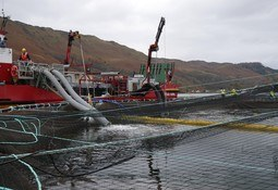 Scotland salmon farm lice average fell in 2020