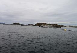 Lavere risiko med utslipp fra brønnbåt