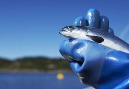 Fiskevelferd i RAS engasjerer internasjonalt