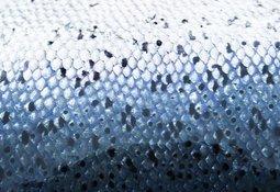La piel del salmón como indicador de bienestar animal