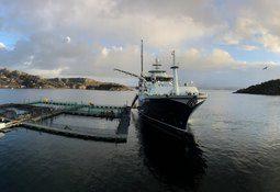 Mener det vil bli lettere å selge fisk med «Norwegian Gannet»