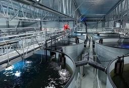 Hendene fulle med RAS-prosjekter i Norge