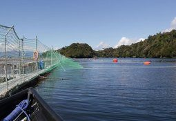 Chilean MPs to vote on salmon farm sediment law