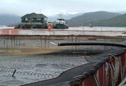 Subpesca: Cosecha de salmones crece 6,5% en 2018
