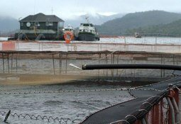 Chile: 'Fish farmers should spend 3% of profits to protect environment'