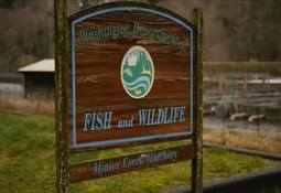 US: state-run fish farm loses 6.2m fry after power cut