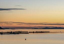 Crean portal que mostrará cifras de sostenibilidad de salmonicultura noruega