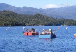 """DVS: """"No es adecuada la recuperación natural de sedimentos del salmón"""""""
