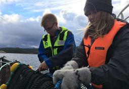 - Meget god interesse for havbruksnæringen blant unge